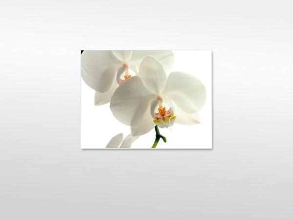 Wandbild XXL Orchidee weiß