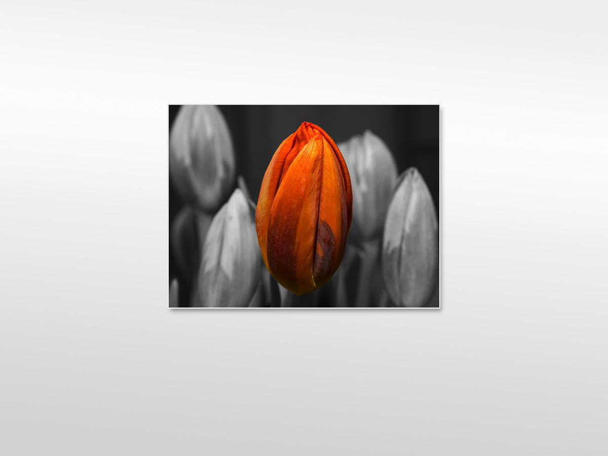 Wandbild XXL orange Flower