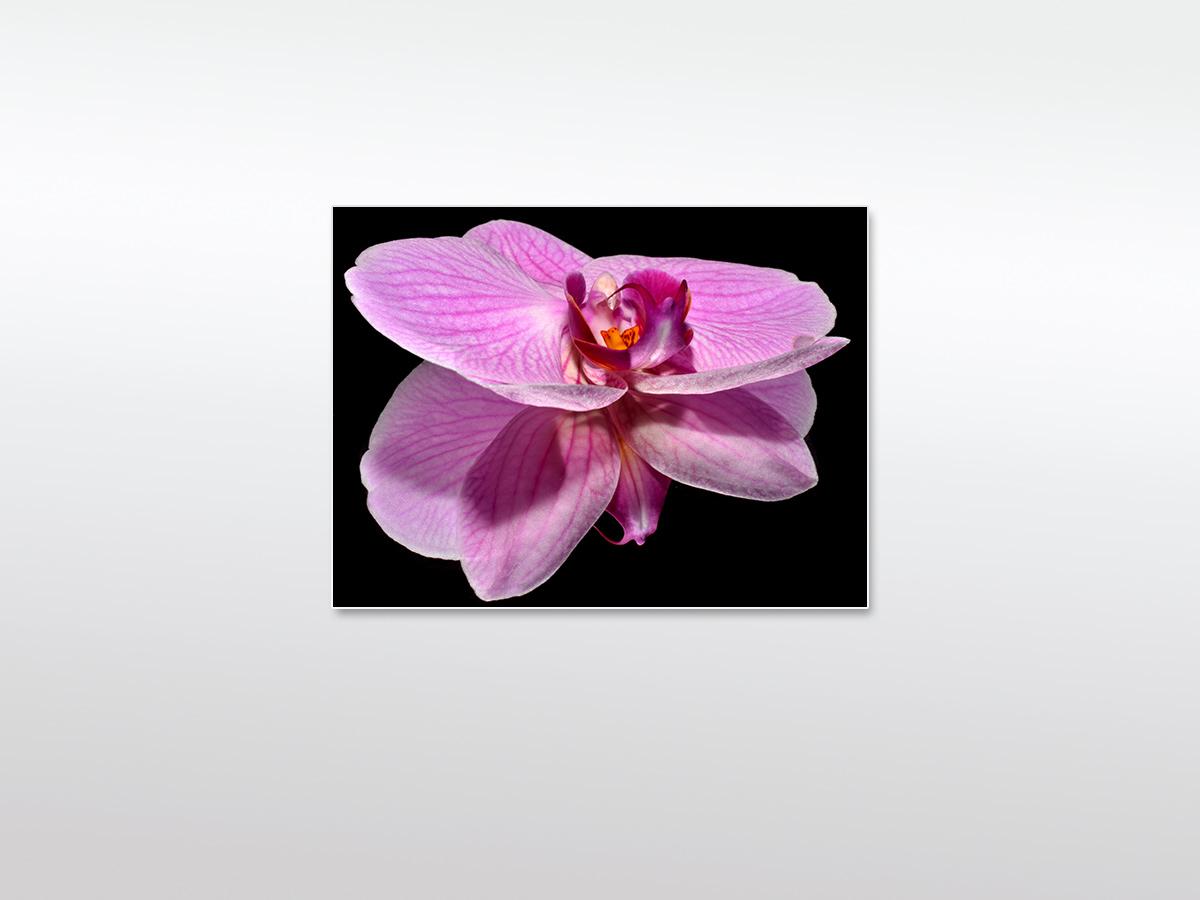 Wandbild Orchidee - Wandbilder XXL