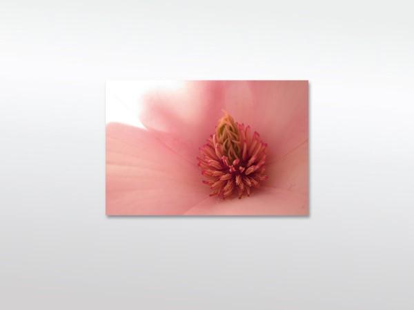 Magnolia Wandbild XXL in verschiedenen Größen