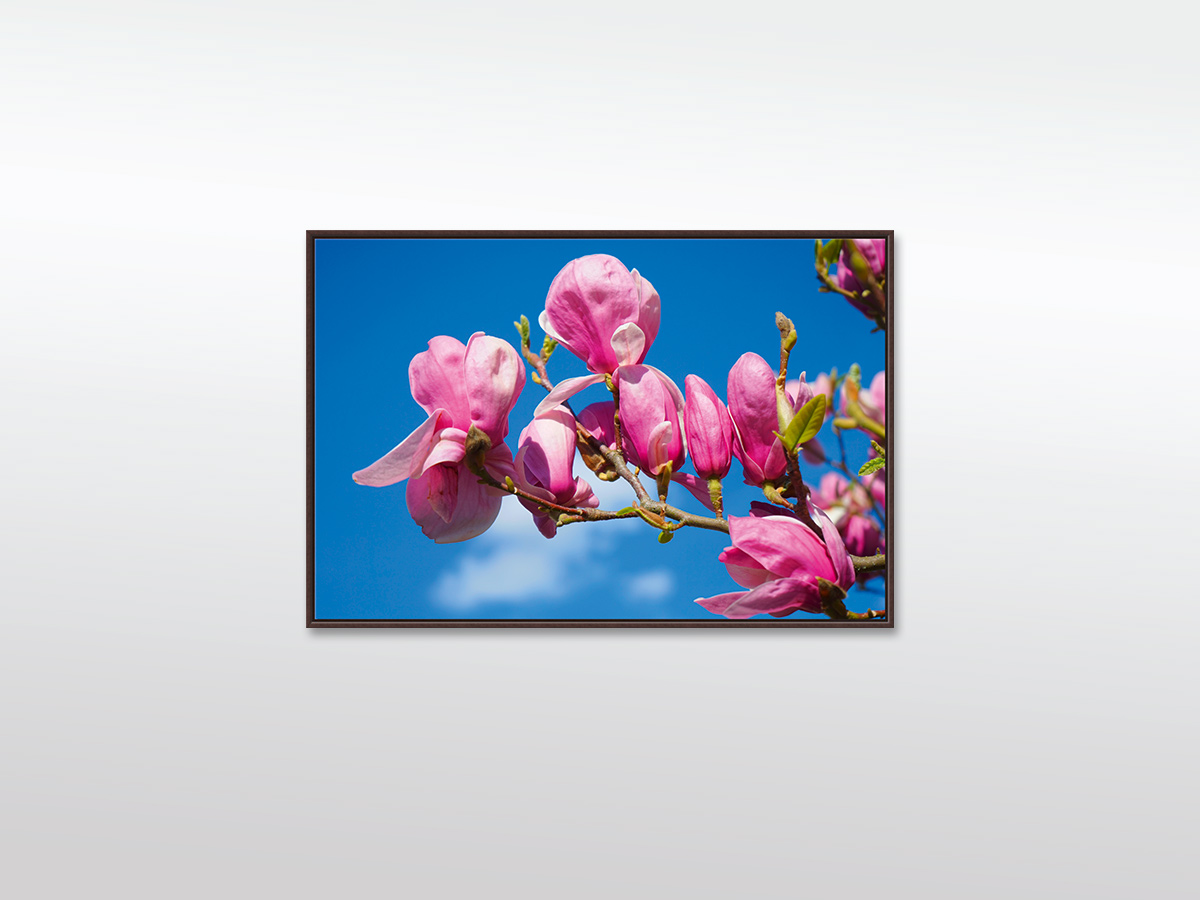 Magnolia Blüten Leinwandbild XXL in verschiedenen Größen mit Schattenfugen-Rahmen, braun