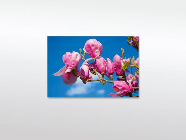 Magnolia Blüten Leinwandbild XXL in verschiedenen Größen