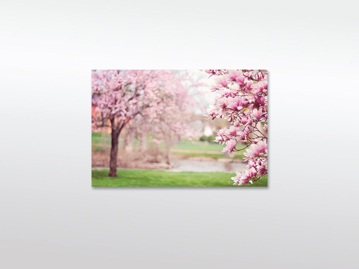 Leinwandbild XXL Magnolia Bäume in verschiedenen Größen