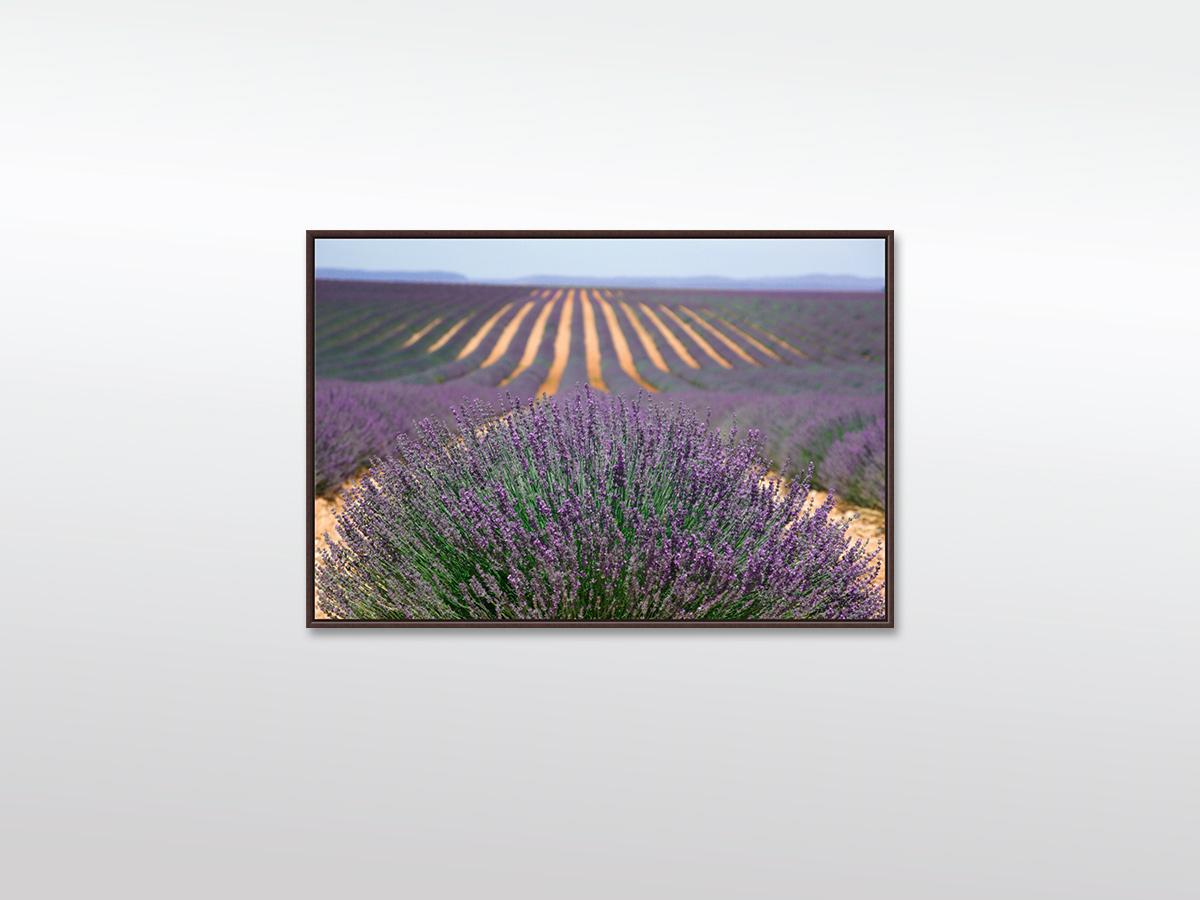 Provence XXL Leinwandbild in verschiedenen Größen mit Schattenfugen-Holzrahmen, braun