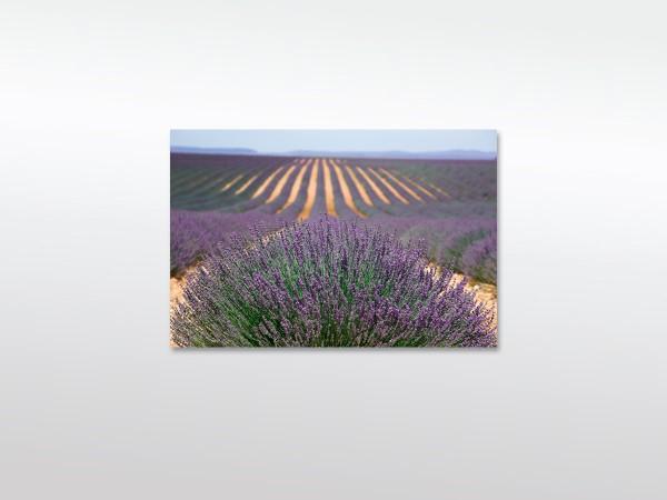 Provence XXL Leinwandbild in verschiedenen Größen