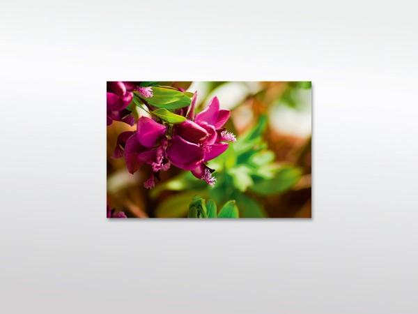 Pink Flowers XXL Leinwandbild in verschiedenen Größen