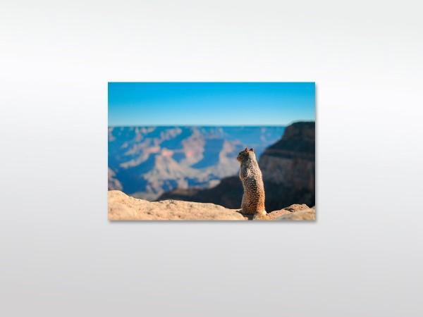Squirrel Leinwandbild in verschiedenen Größen